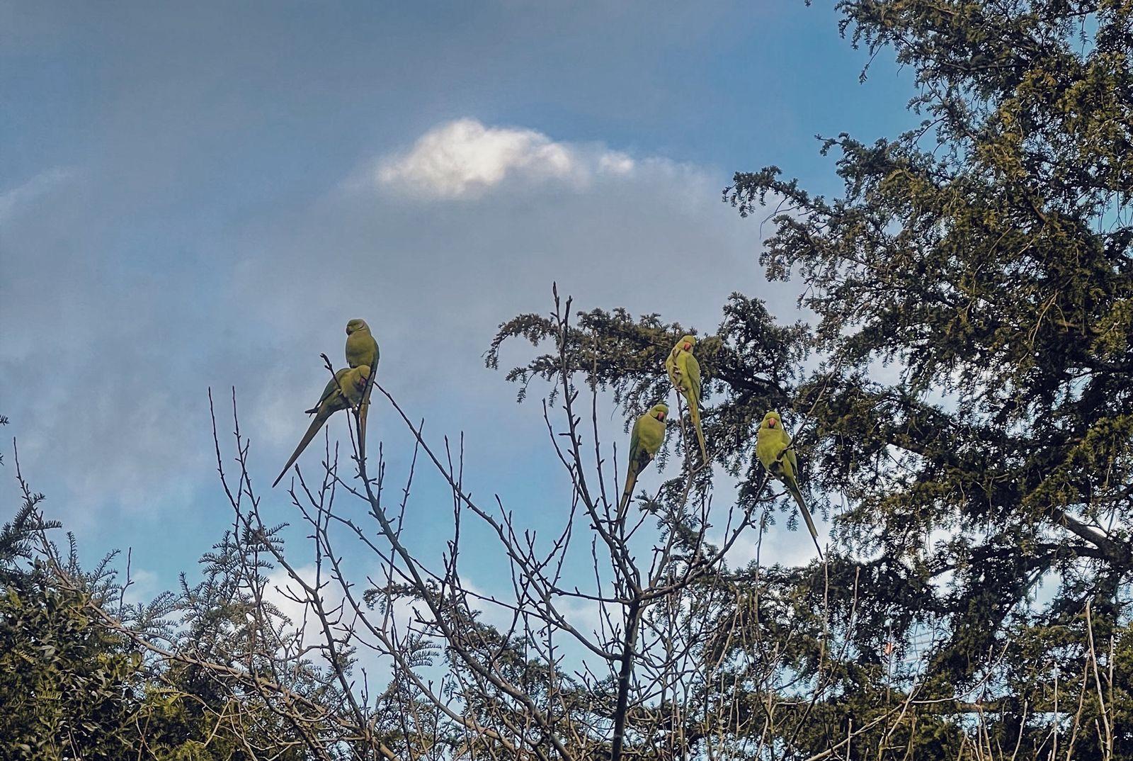 parakeets in the garden