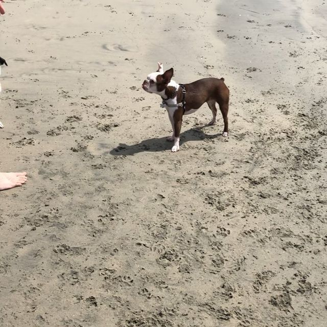 Dog Beach Banner Image