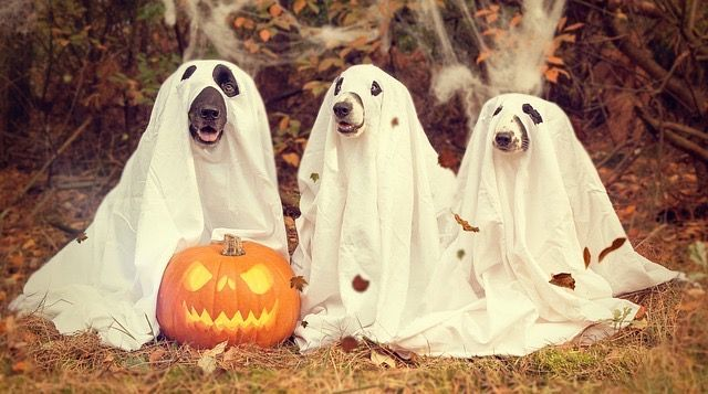 Dogs in Ghost costumes sheets