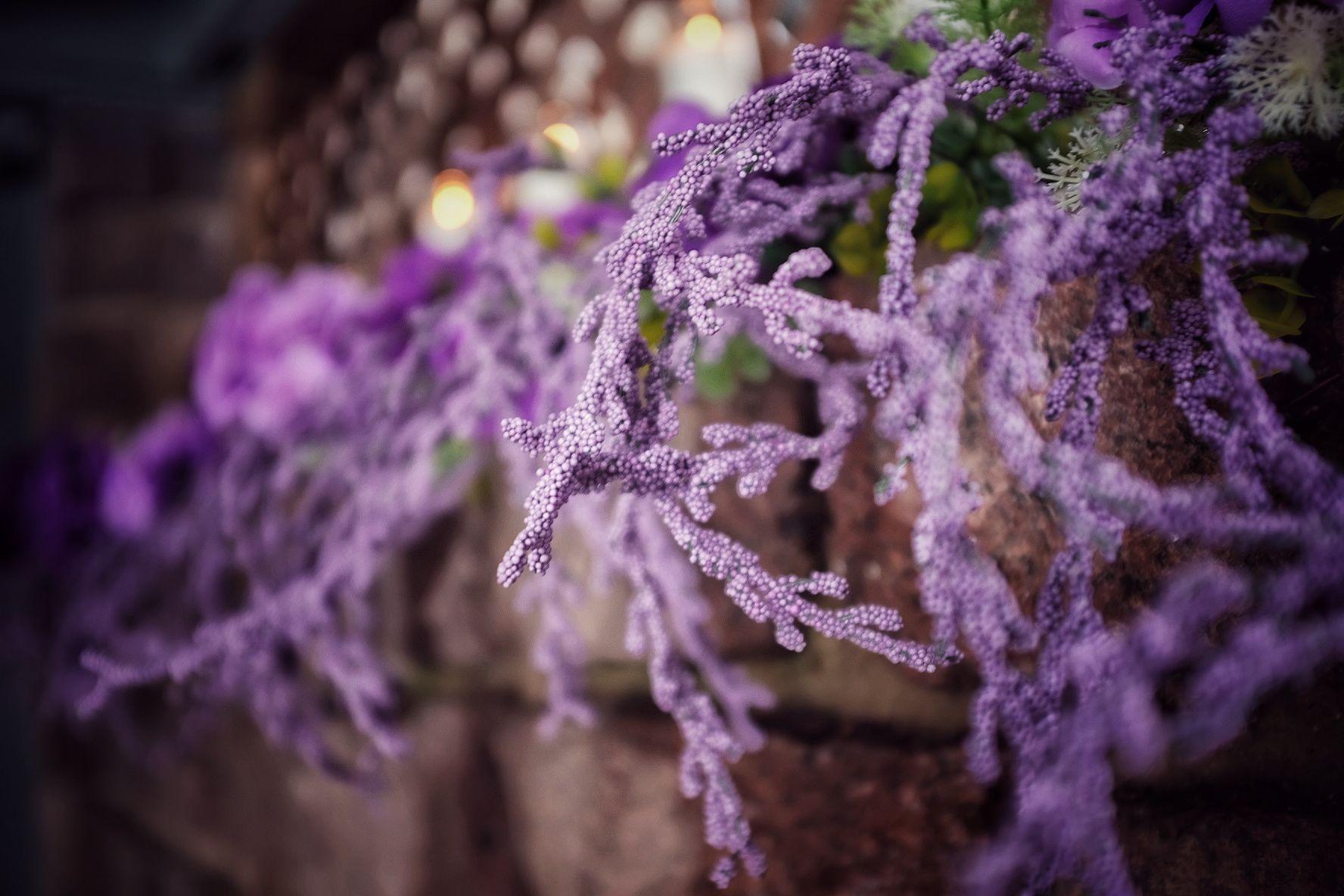 Purple flower stems