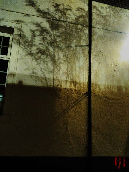 Very sharp shadow of a tree thrown on a white wall by artificial light.