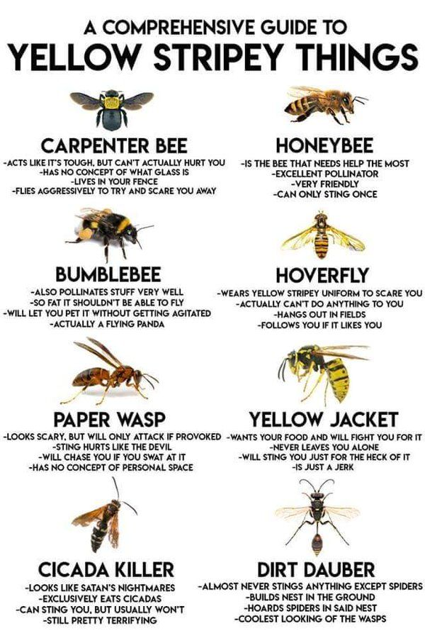 A diagram showing the various types of wasps and bees and which can be a bit of a pain metaphorically and literally