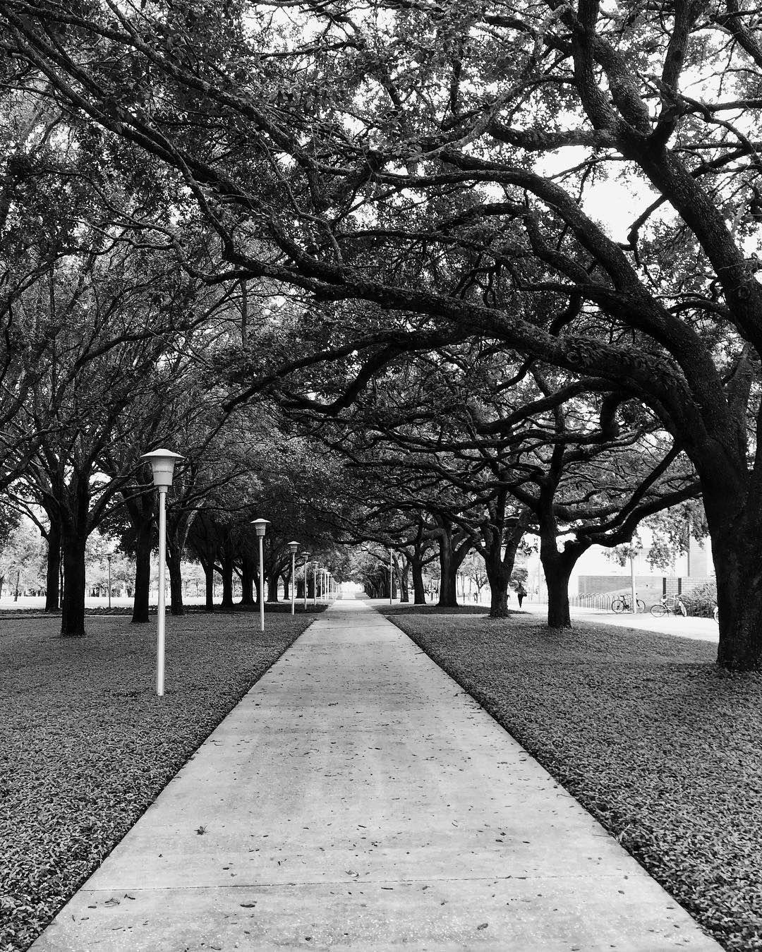 MLK Trees black and white