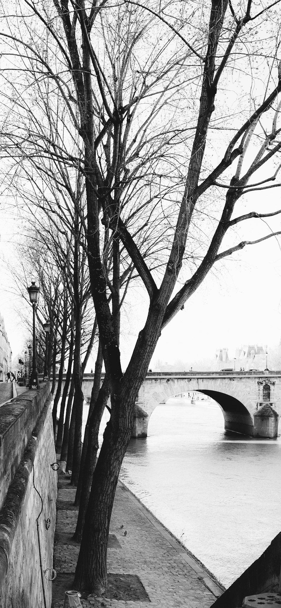 Trees on Ile Saint-Louis