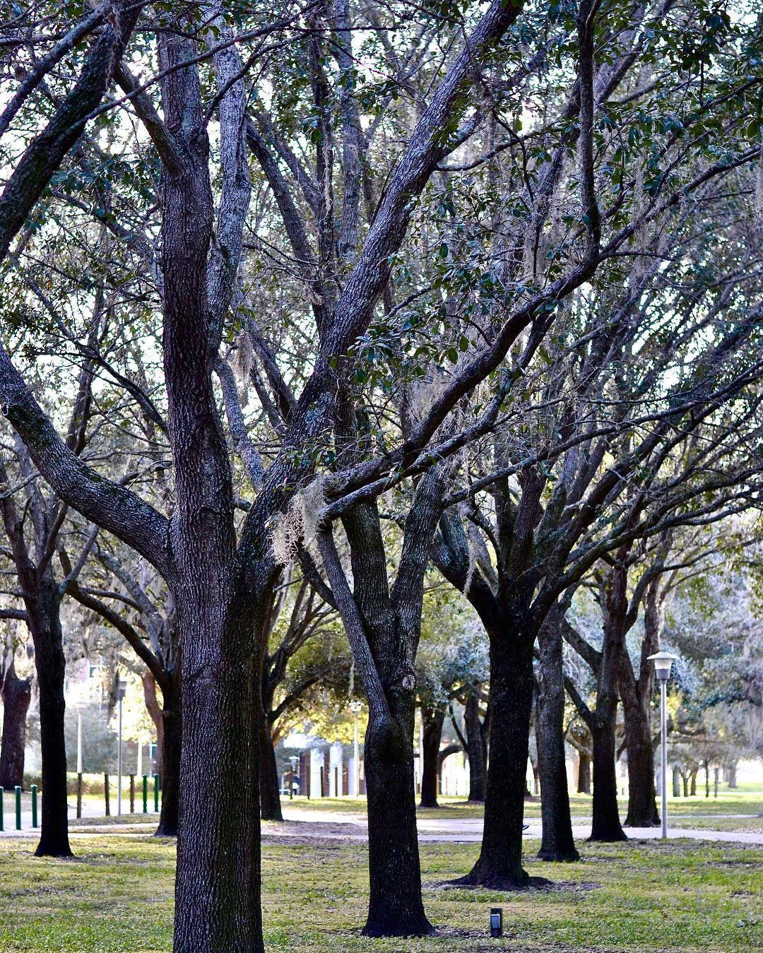 MLK Plaza Trees