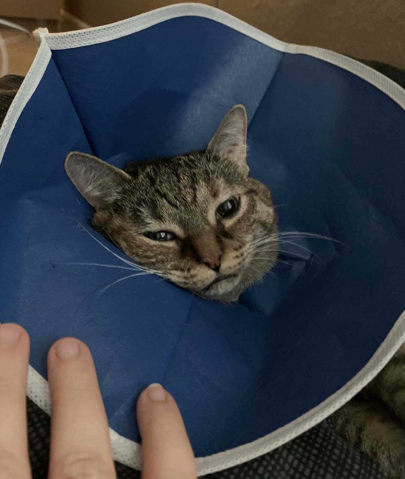 Cora hates her new cone