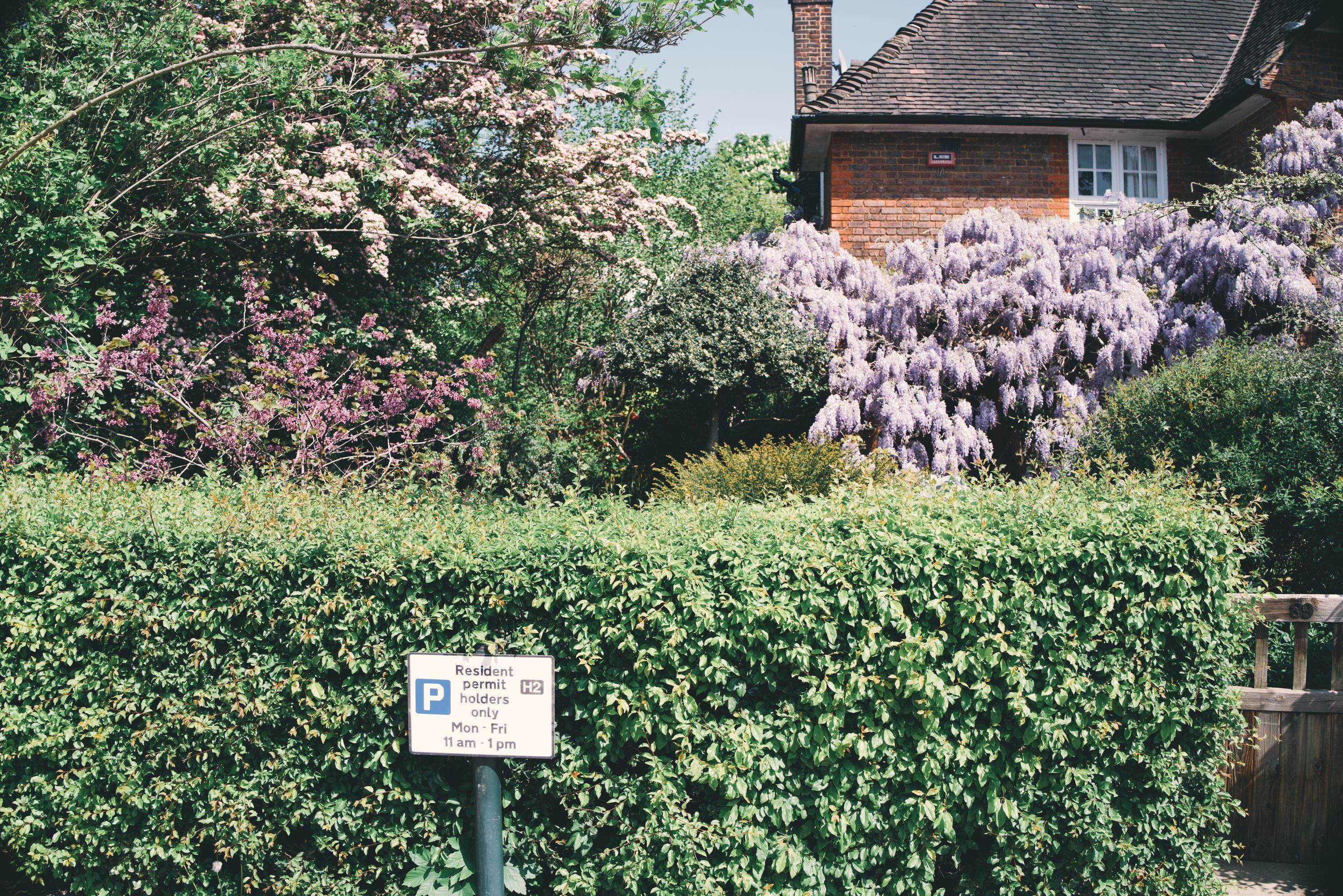 corringham road wisteria