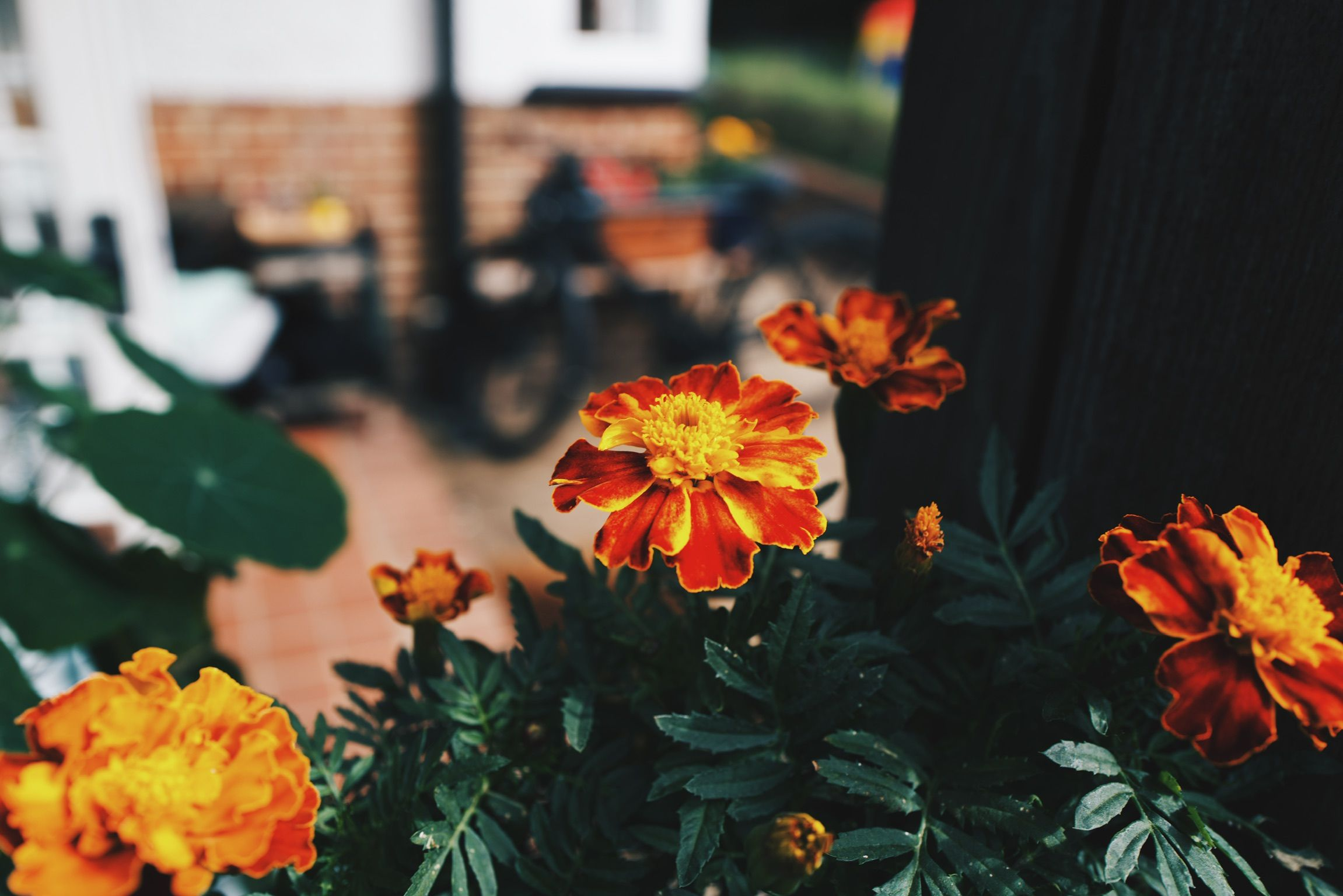 saturday in the garden 4