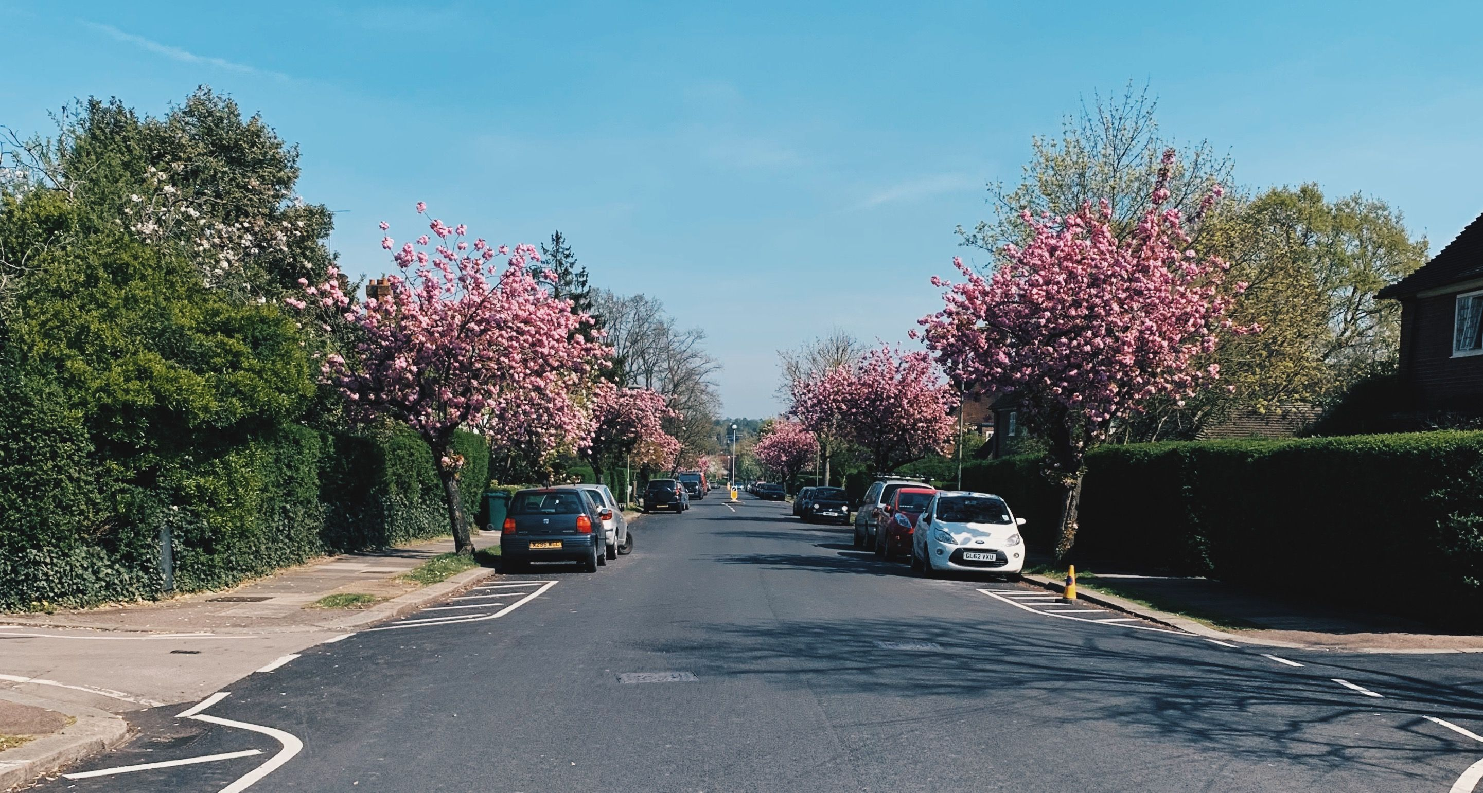 blossom on meadway