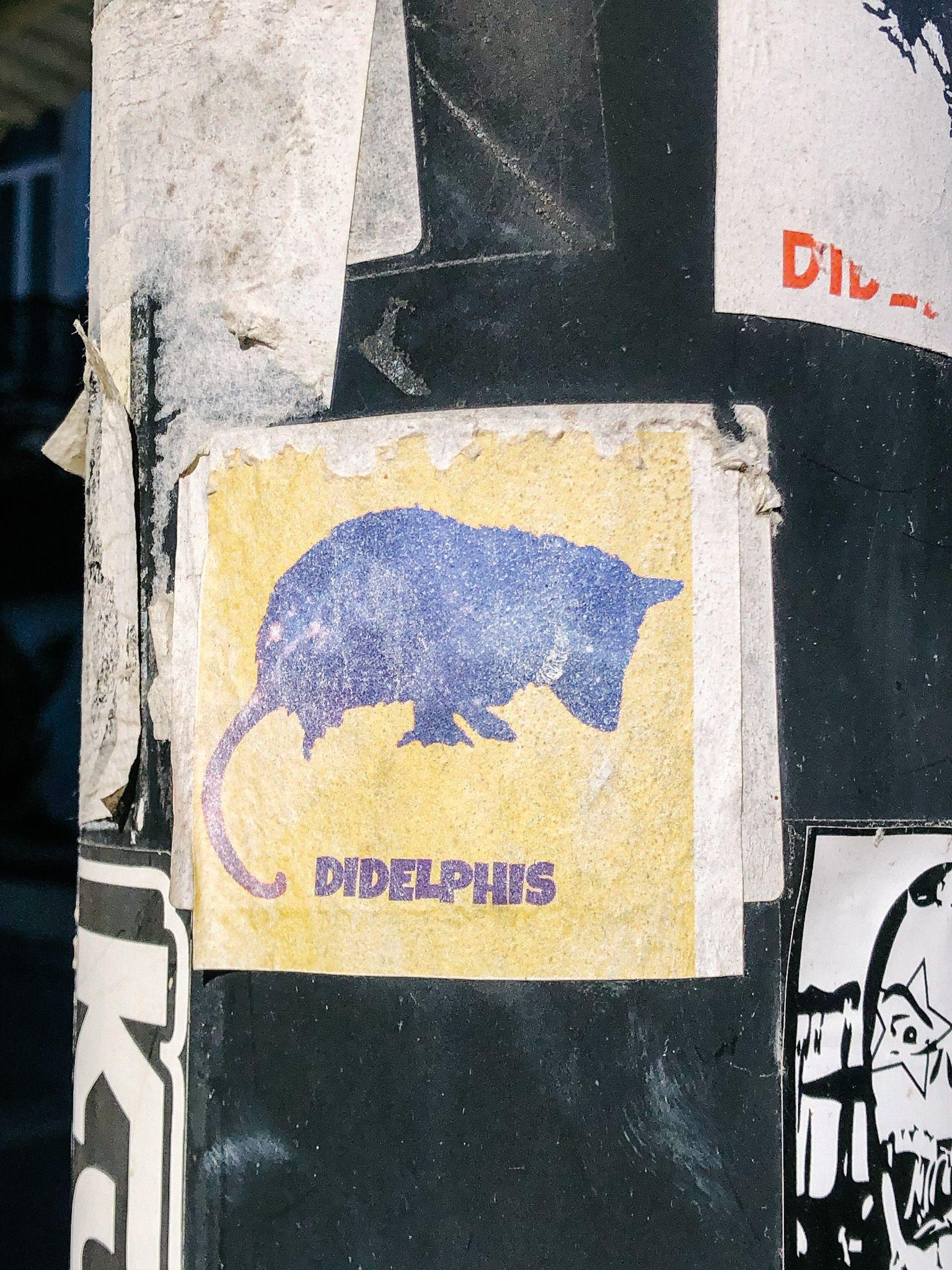 didelphis