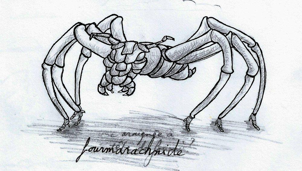 Une fourmarachnide