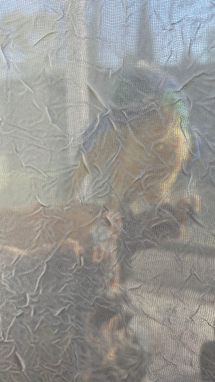 parrot on windowsill through curtain
