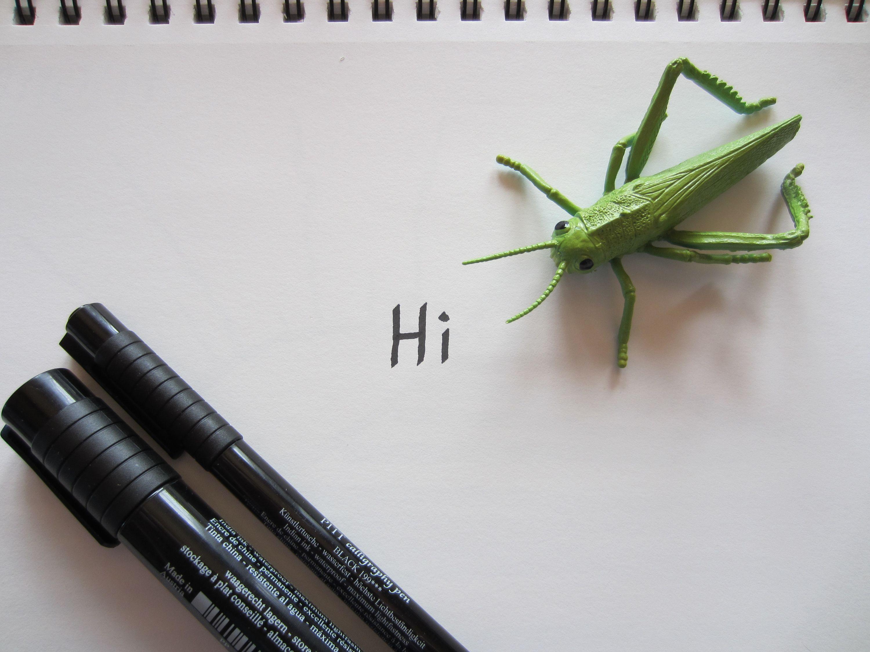 grasshopper says hi