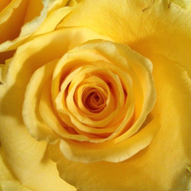 roses 49001751793 o