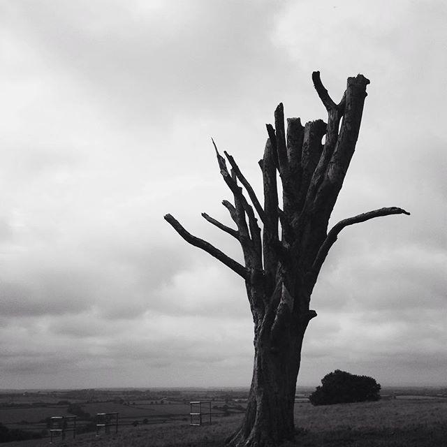 dead tree at dyrham 49002500742 o