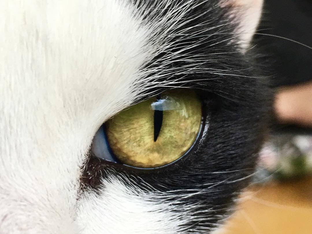 frank says eye 49001748978 o