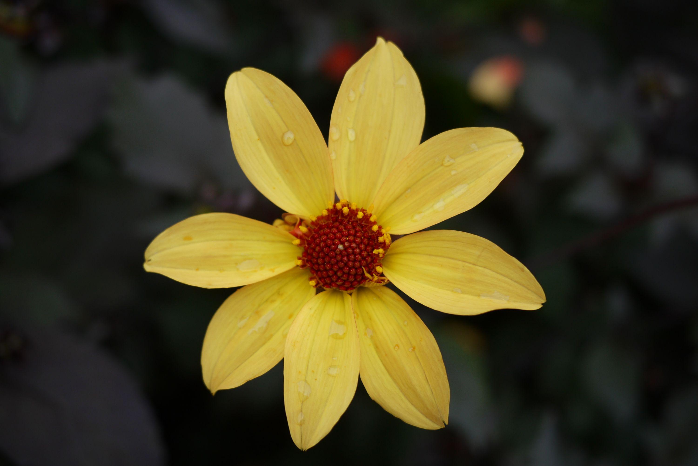 yellow 15083837102 o