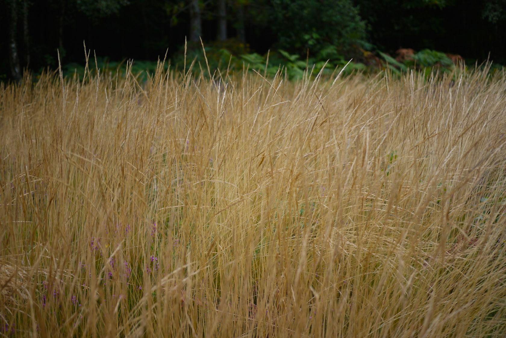 grasses 15083816292 o