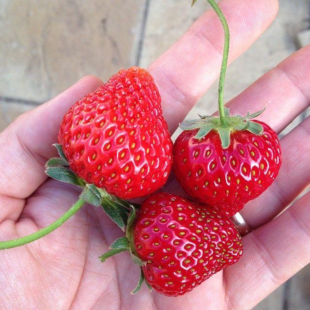 fresh from the garden   49001741758 o
