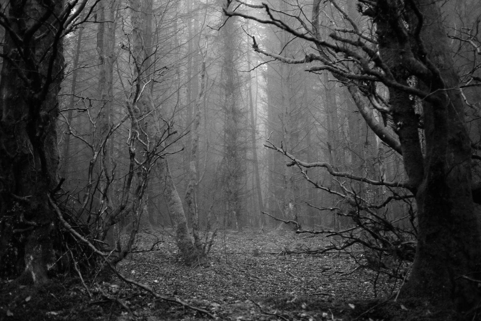 trees-2 15081160081 o