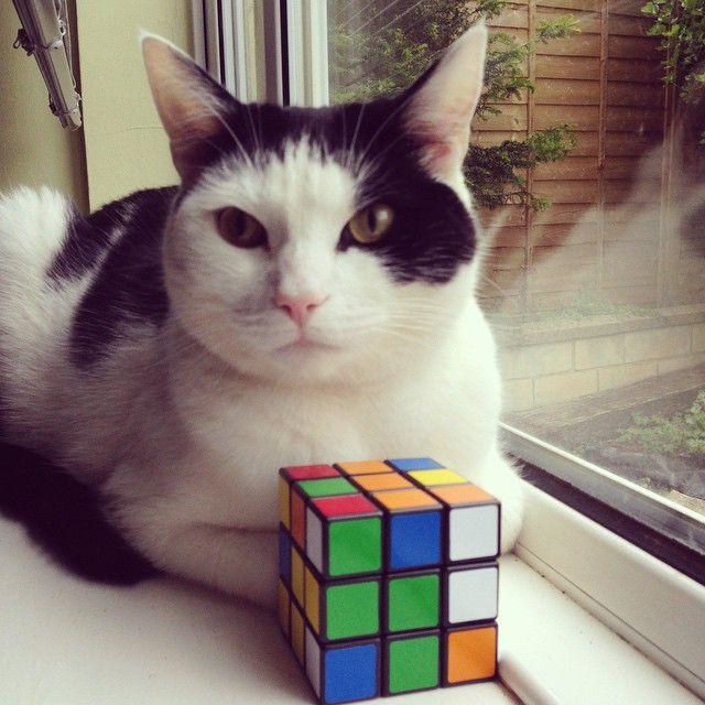 rubik s cat  cat  cube 49002473577 o