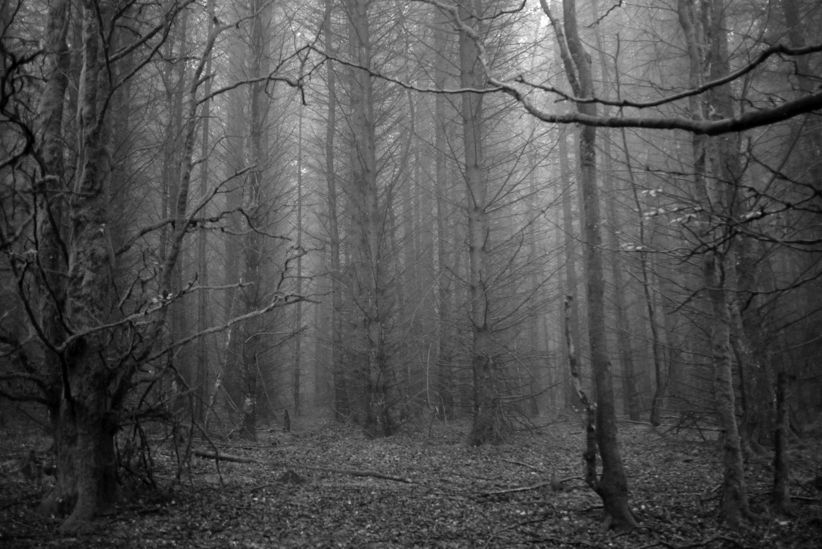trees-1 14897595868 o