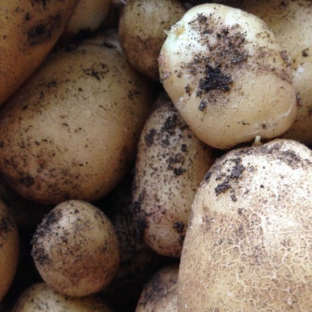yet more spuds 49002488022 o