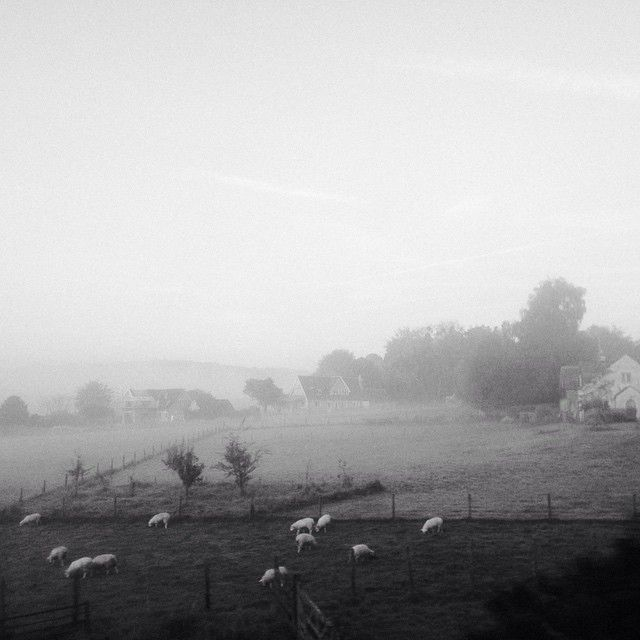 foggy morning 49002488037 o
