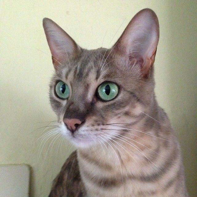 maya says hi  cat 49002502617 o