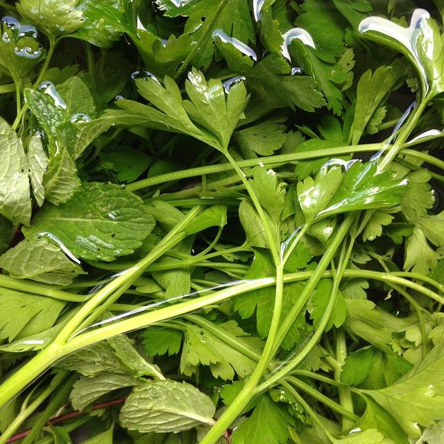 mint and parsley from the garden 49001745043 o