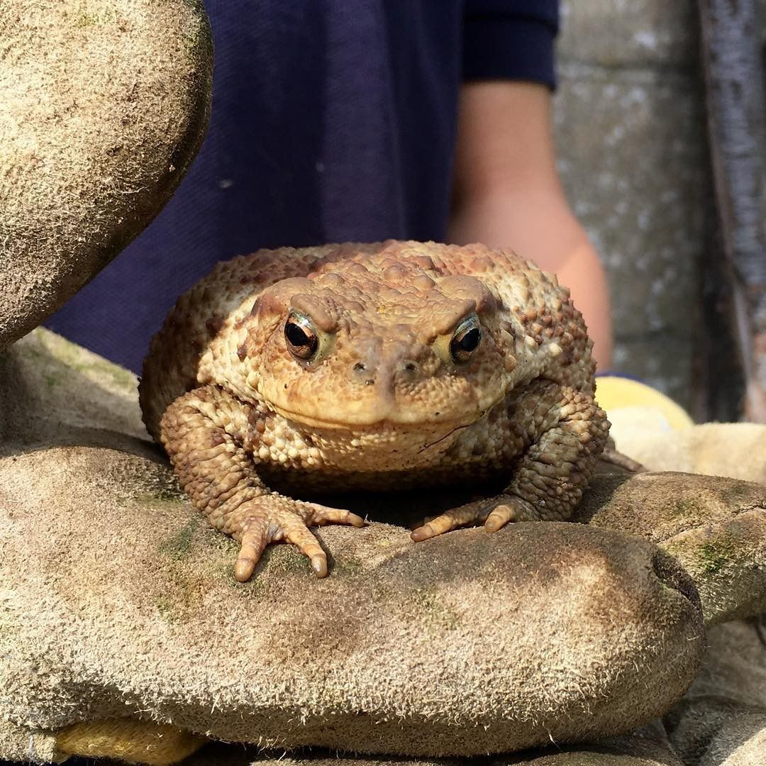 found a toad 49001748683 o