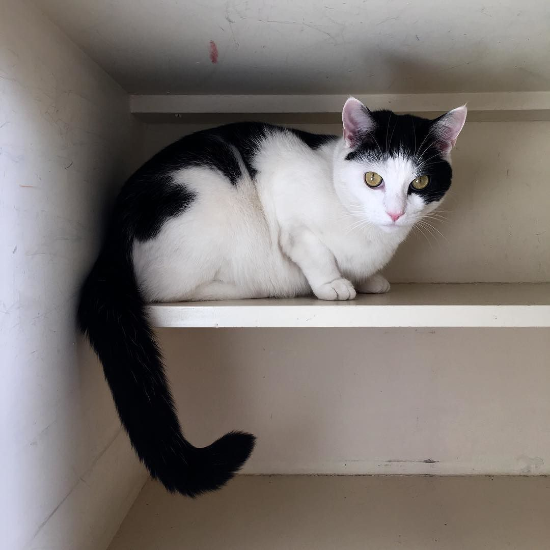 frank assumes the cupboard was emptied for his benefit 49002502132 o