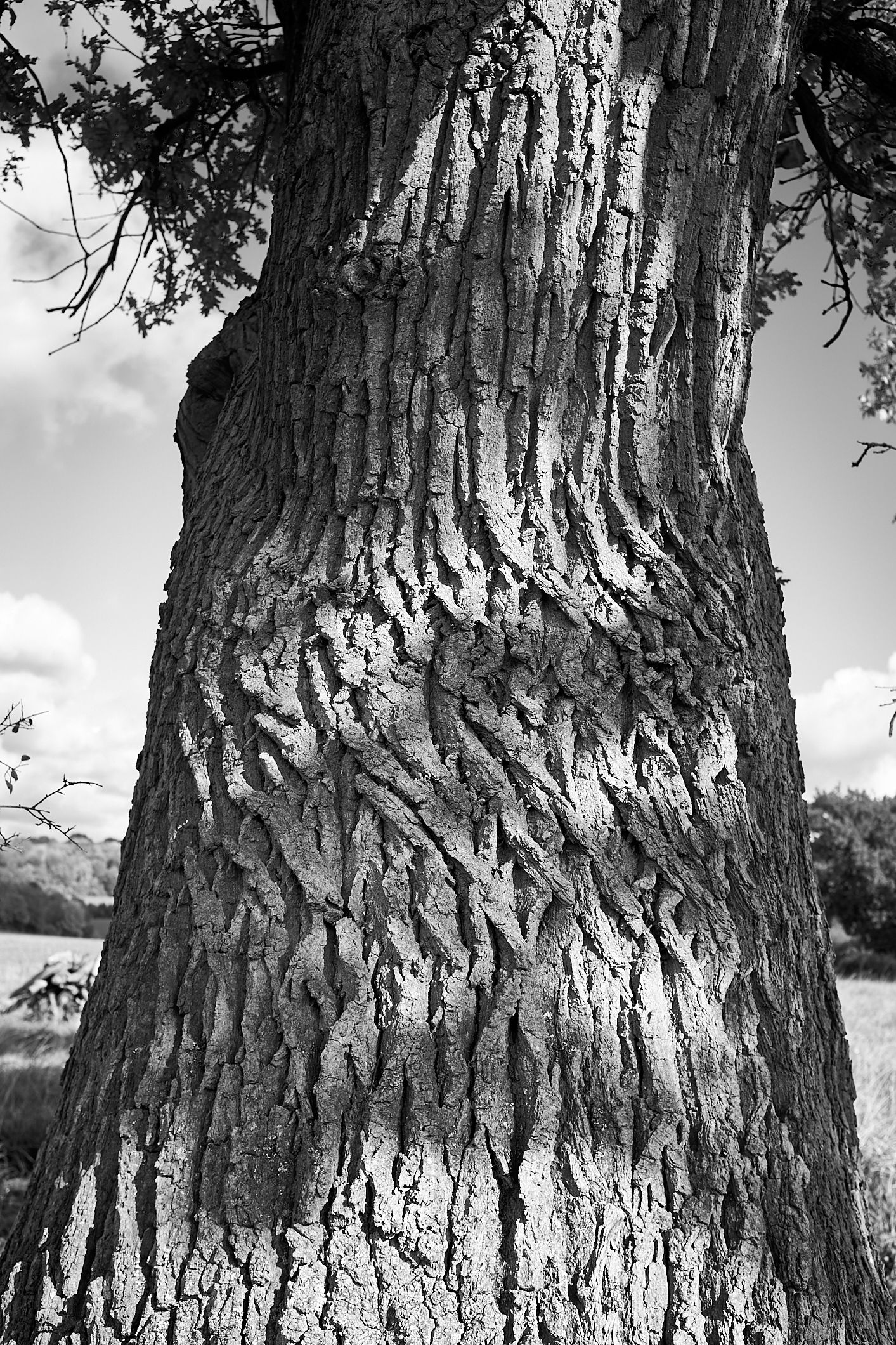 twisted bark