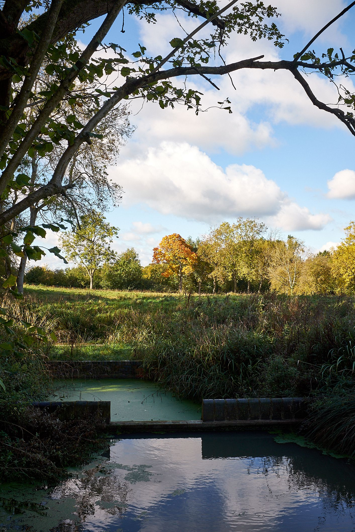 ponds and autumn tree