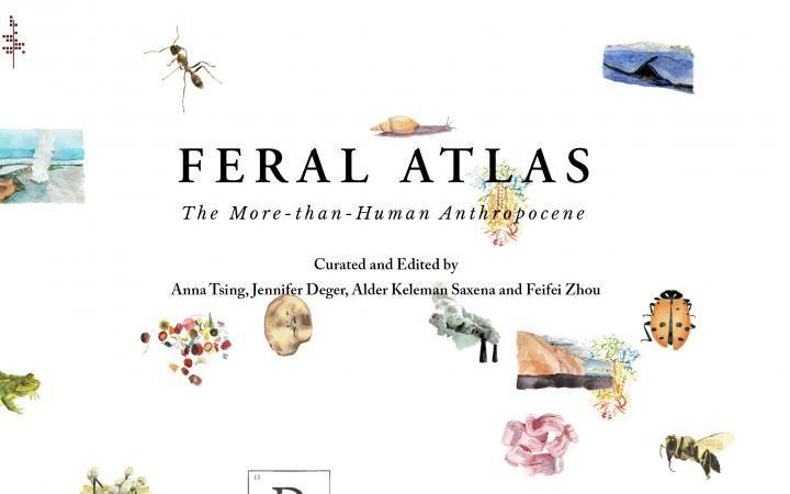 O Feral Atlas da Anna Tsing