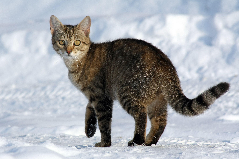semiotic cat